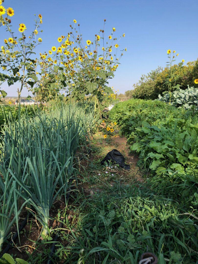 tile_garden